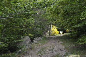 Mont-Lozère - entre Felgeirolle et Pont-du-Tarn